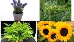 13 plantas que atraen la energía positiva a tu vida