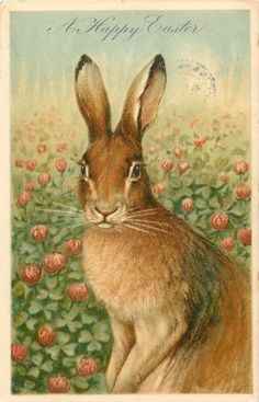 A HAPPY EASTER rabbit sits in clover, faces left, looks front - TuckDB