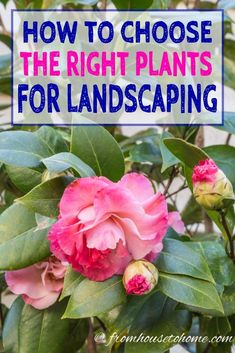 Looking for some garden design ideas? This guide will help you pick the right plants for your landscape which will make growing your garden so much easier! #GardenPlants #GardeningTipsAndPlants #LandscapePlants #ChooseGardenPlants #gardendesign