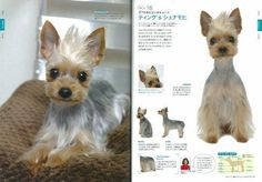 Yorkie Yorkshire Terrier the Dog Grooming Hair Style Arrange Japanese Book New