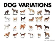 Different Dog Breeds Poster | Dogs dogs...I love DOGS ...