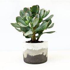 3 Toned Concrete Planter ❤ liked on Polyvore featuring home, outdoors, outdoor decor, concrete pots, succulent planter, concrete planters and succulent pots