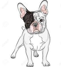 Buy Vector Sketch Domestic Dog French Bulldog Breed by Kavalenkava on GraphicRiver. Closeup portrait of the domestic dog French Bulldog breed on the white background. EPS 8 plus high-quality Jpeg. French Bulldog Drawing, French Bulldog Harness, French Bulldog Breed, French Bulldogs, Cãezinhos Bulldog, Bulldog Breeds, Positive Dog Training, Basic Dog Training, Training Dogs