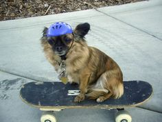 <b>Grab a Mountain Dew and get in the mood to shred pipe with these totally extreme animals!</b> Also, at the end there's a video of a skateboarding monkey.