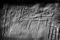 Représentation d'un cervidé, dans l'abri de la Ségognole, forêt des Trois-Pignons (Noisy-sur-École). / Emmanuel Breteau