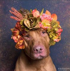 Pit Bulls in Flower Crowns | By Sophie Gamand | Helping to raise pit bull awareness