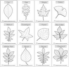 Leaves Learning Coloring Pages: