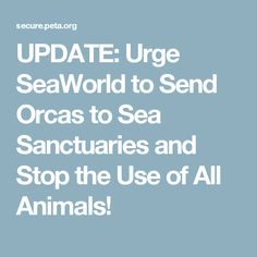 UPDATE: Urge SeaWorld to Send Orcas to Sea Sanctuaries and Stop the Use of All Animals!