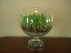 Monkey See - Monkey Do: Spring Grass Terrarium