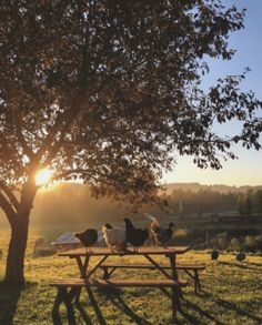 Chickens on wood bench /picnic table sunrise countryside Country Farm, Country Life, Country Living, Country Roads, Esprit Country, Vie Simple, Flora Und Fauna, Future Farms, Nature Aesthetic