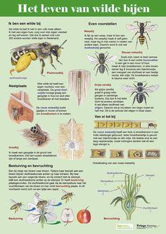Paneel gemaakt in opdracht van IVN Noord-Kennemerland #bijen #wildebijen I Love School, Nature Table, Grow Your Own Food, Fauna, Science For Kids, Botany, Amazing Nature, Organic Gardening, Animals Beautiful
