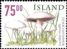 Sello: Mushrooms (Islandia) (Mushrooms) Mi:IS 916,Sn:IS 882,AFA:IS 901