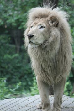 so handsome and majestic