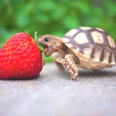 1000+ images about Turtles for Julia on Pinterest Turtles, Plastic ...