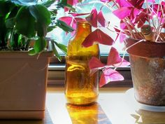 Using plants to clean the air in your home.  A brief and helpful guide by A Delightful Home.