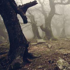 Walnut forest II by vbagiatis.deviantart.com on @deviantART