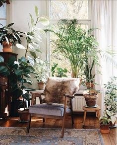 greenery and chair