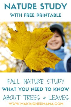Fall nature study - What you need to know about trees and leaves. Come and see what activities, art, and language arts you can add to your fall studies. And grab your FREE copywork/dictation printable.