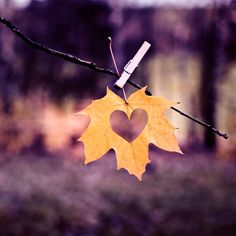 to ''Fall'' in love!