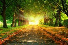 Árboles, puesta de sol, naturaleza, paisaje, hermoso, majestuoso, árboles, al atardecer, deja la carretera wallpaper
