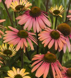 46 Best Flowers Images Flowers Garden Sitting Areas Bristol Garden