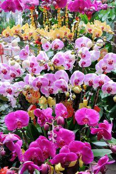 Hong Kong Flower Market