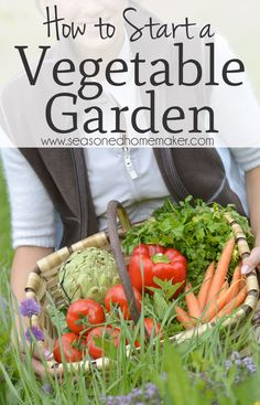 How to Start a Vegetable Garden: Nothing is more DIY than a vegetable garden. The first thing you need to know is anyone can have a green thumb. It's really all about paying attention to the plants in the garden. Indoor Vegetable Gardening, Starting A Vegetable Garden, Vegetable Garden For Beginners, Vegetable Garden Design, Organic Gardening Tips, Gardening For Beginners, Allotment Gardening, Gardening Hacks, Gardening Supplies