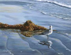 The Gazing Gull