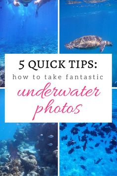 Underwater Photography Tips: 5 Ways to Improve Your Photos How to Take Better Underwater Photos! 5 EASY tips! >> great pin to save for that future tropical getaway! Nature Photography Tips, Photography For Beginners, Photoshop Photography, Underwater Photography, Beach Photography, Photography Tutorials, Amazing Photography, Landscape Photography, Travel Photography