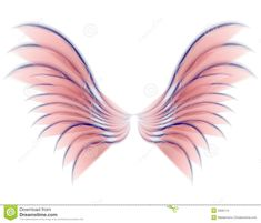 fairie wings | ... illustration of isolated fairy, angel or bird wings in pink colors