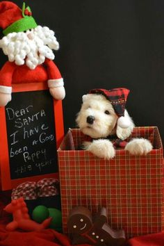 More picture ideas. Dog Christmas Pictures, Christmas Puppy, Christmas Animals, Christmas Cats, Christmas Time, Best Puppies, Cute Puppies, Puppies Tips, Tiny Puppies