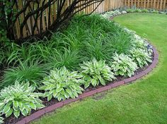 This yard has a number of ideas to cut down on landscape maintenance - hostas and day lilies require almost no care, and the brick edging keeps weeds out of the grass plus makes it easier to mow close to the plants.