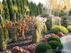 Na zielonej... trawce :) - strona 16 - Forum ogrodnicze - Ogrodowisko