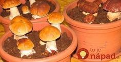 Most people who go in for mushroom growing just go out and buy both the spores (or spawn) and the growth medium. They do this because this is the easiest way to grow mushrooms. But if you are thinking of growing mushrooms commercially Porcini Mushrooms, Stuffed Mushrooms, Herb Garden, Vegetable Garden, Container Gardening, Gardening Tips, Urban Gardening, Culture Champignon, Culture D'herbes