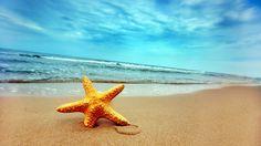 Морская звезда в песке