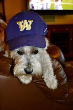 "W Day Photo Contest 2014: ""Husky Football Fan"" 
