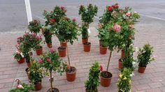 Ihania kesäkukkia Mäntsälän kesäpäivän avaus -tapahtumassa. Lue Kivapihan blogista lisää. Finland, Plants, Planters, Plant, Planting