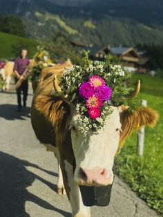 Be part of a traditional Swiss alpine festival in autumn and admire these beautiful Swiss cows. Published: September 2019 (c) Switzerland Tourism Flower Festival, Wine Festival, Farm Animals, Animals And Pets, European Festivals, Switzerland Tourism, Running Of The Bulls, Alpine Flowers, Cattle Farming