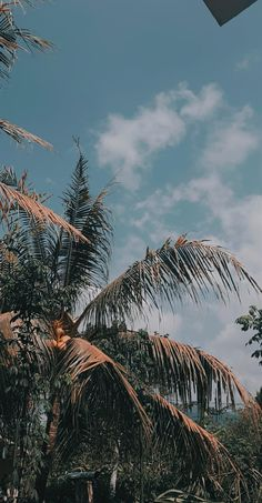 Summer Wallpaper, Tree Wallpaper, Scenery Wallpaper, Aesthetic Pastel Wallpaper, Aesthetic Backgrounds, Aesthetic Wallpapers, Wallpaper Backgrounds, Tumblr Photography, Nature Photography