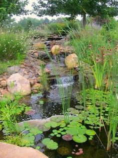Rain Garden Design Ideas, Pictures, Remodel, and Decor - page 10