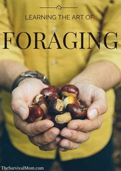Don't bypass edible plants, nuts, and even insects! Learn how to forage. Here are the basics for getting started on this fun survival skill. #survivalskills