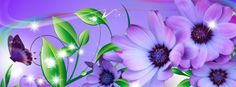lavender-flower-rainbow-fb-cover.jpg (851×315)