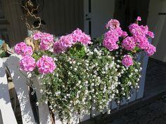 kukkaloistoa viime kesänä