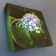 Blue and Purple Hydrangea Stretched Canvas by BlueHydrangeaCanvas