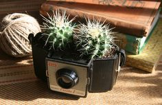 cactus in vintage camera! Would love to do this with some of my vintage cameras! Old Cameras, Vintage Cameras, Succulents In Containers, Cacti And Succulents, Succulent Ideas, Cactus Pot, Co Working, Interior Stylist, Interior Design