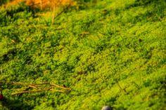 Intense green moss at Vlieland - picture made by Bart Lebesque