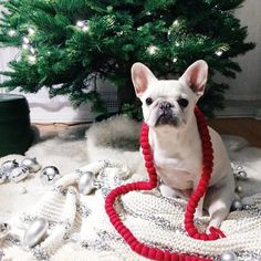 10 West Elm Pets Who Stole Our Hearts in 2014