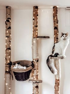 Birch scratching post - Watch out for cat lovers our white cleaned birch trees are perfect for DIY cat trees now at Birkend - Cat House Diy, Diy Cat Tree, Cat Perch, Cat Shelves, Cat Playground, Cat Room, Pet Furniture, Cat Wall, Cat Crafts