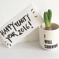 Urban Jungle Bloggers: Planty Wishes for 2016 by @sophiagaleria