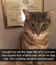 I bought my cat the legal title of a Lord and one square foot of land over which he may rule. His Lordship remains unimpressed. via /r/funny. Cute Funny Animals, Funny Animal Pictures, Funny Cute, Best Funny Pictures, Cute Cats, Silly Cats, Animal Pics, I Love Cats, Crazy Cats